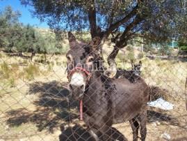 Πότε απαιτείται άδεια δόμησης για κτηνοτροφικές εγκαταστάσεις