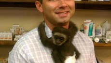 DB monkey