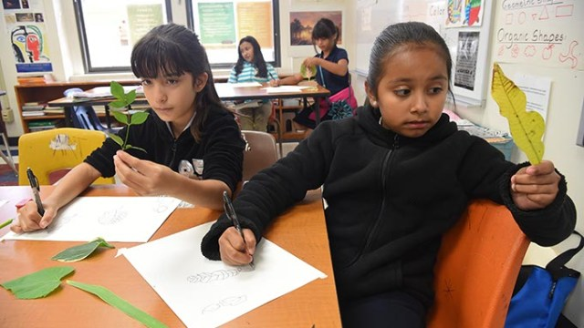 Left to right, Jackie Carrera and Emili Carrion, both 4th graders at Lee Elementary School in OKC, study their own leaves and transfer what they see to the paper as they participate in an after school art project at the Southside OKC School, 9-14-15.  (Mark Hancock)