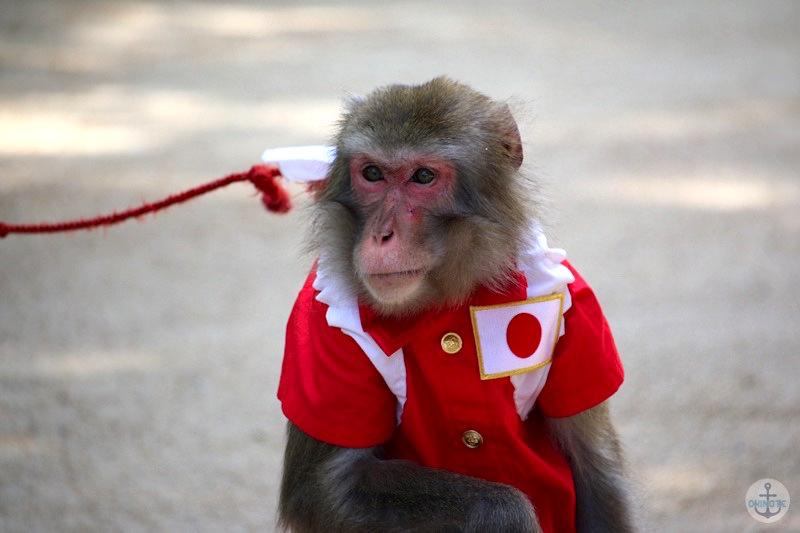 太宰府天満宮の猿回し
