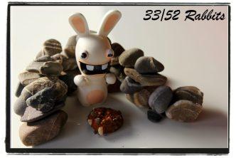 rabbit33