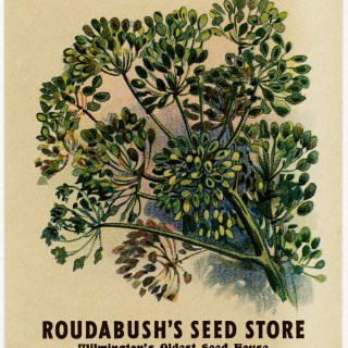 Caraway Vintage Seed Packet
