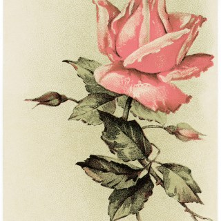 Pink Rose Vintage Easter Card