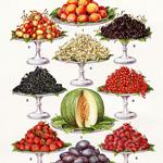 mrs beetons fruit, vintage food clipart, old cookbook page, printable food image, antique illustration fruit