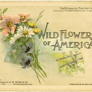 Wild Flowers of America Cover 1894