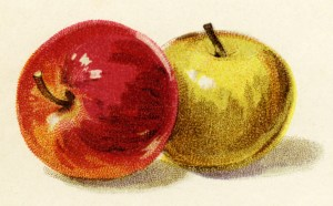 red apple, yellow apple, free vintage fruit clipart, antique illustration apples, digital image for graphic design, free printable scrapbooking image