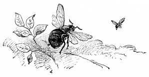 wasp and bee, sketch of insect, old story image