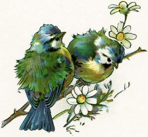 free vintage image, bird graphic, public domain bird image, royalty free image, birds on branch, blue yellow birds, free vintage clipart birds