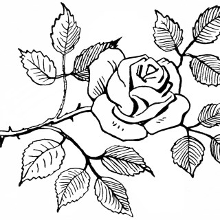 Rose Sketch ~ Free Vintage Clipart