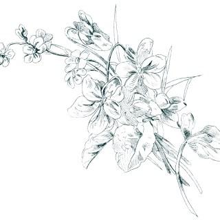 Free Vintage Image ~ Floral Sketch