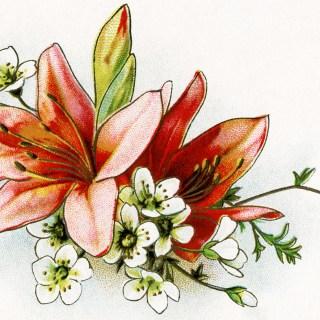 Free Vintage Floral Image ~ Lilies
