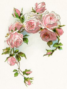 free vintage image, free vintage clipart rose, pink roses, roses and lilies longfellow, digital image for graphic design, pink flowers illustration