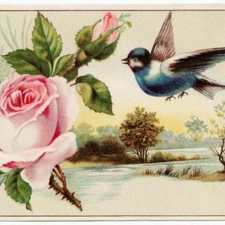 Pink Rose, Blue Bird, Scenic Victorian Card