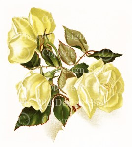 yellow roses,red roses,dell and bower,vintage floral image,susie barstow skelding,vintage rose illustration