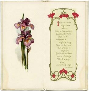 open book pages, vintage purple iris, today by emerson, antique book graphics, vintage flower clip art
