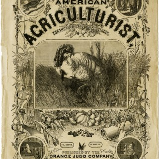American Agriculturist Nov 1879 Cover