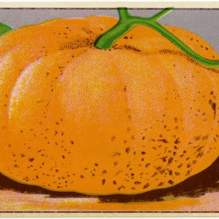 French Pumpkin Seed Label ~ Free Clip Art