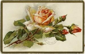 Free Vintage Image ~ Shabby Yellow Rose Greetings Postcard