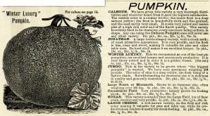 vintage pumpkin clip art, black and white clipart, winter luxury pumpkin image, henderson pumpkin varieites, garden catalogue clip, printable garden graphics