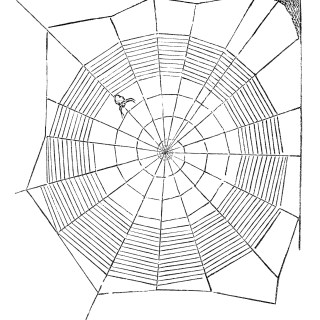 Spider and Web ~ Free Vintage Clip Art