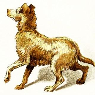 Free Vintage Image ~ Golden Brown Dog