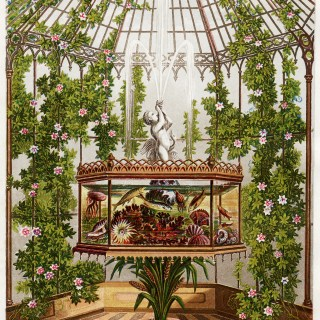 Conservatory and Aquarium ~ Free Vintage Image