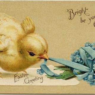 Vintage Easter Chick Postcard ~ Free Digital Image