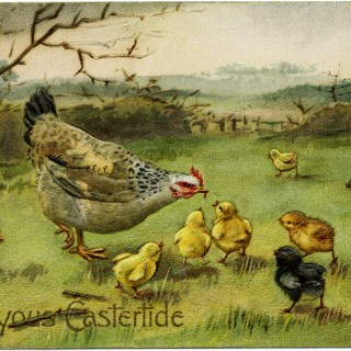 Hen Feeding Chicks Vintage Easter Postcard ~ Free Digital Image