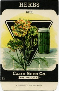 vintage garden clip art, old fashioned seed package, dill herb image, dill pickles illustration, card seed co
