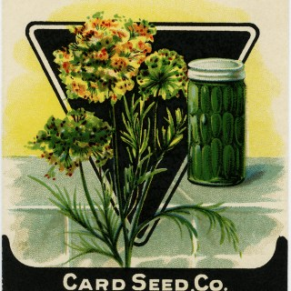 Vintage Dill Herb Seed Packet ~ Free Digital Graphics
