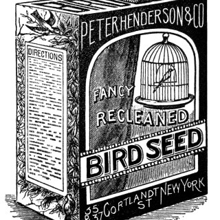 Bird Seed Ad and Clip Art ~ Free Vintage Graphics