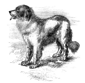 newfoundland dog image, vintage dog clipart, black and white clip art, animal printable, happy puppy dog illustration