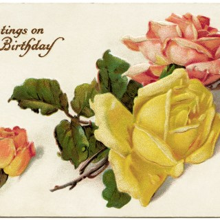 Catherine Klein Roses ~ Free Vintage Stecher Postcard Graphic