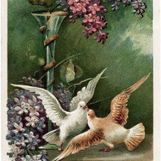 Flowers and Birds ~ Free Vintage Postcard Image