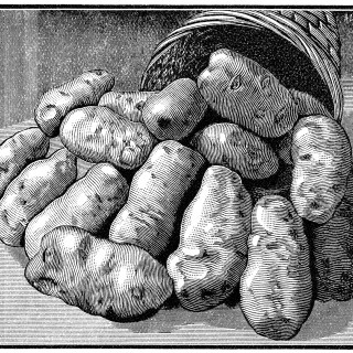 Bowker Fertilizer Magazine Advertisement and Potatoes ~ Free Vintage Clip Art