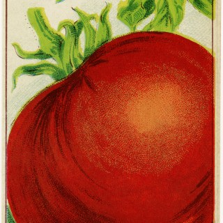 Tomato French Seed Label ~ Free Vintage Image