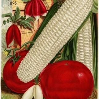 Fresh Garden Vegetables ~ Free Vintage Image