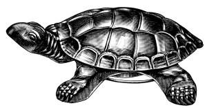 turtle cuspadore image, vintage catalog ad, black and white graphics free, vintage turtle clip art