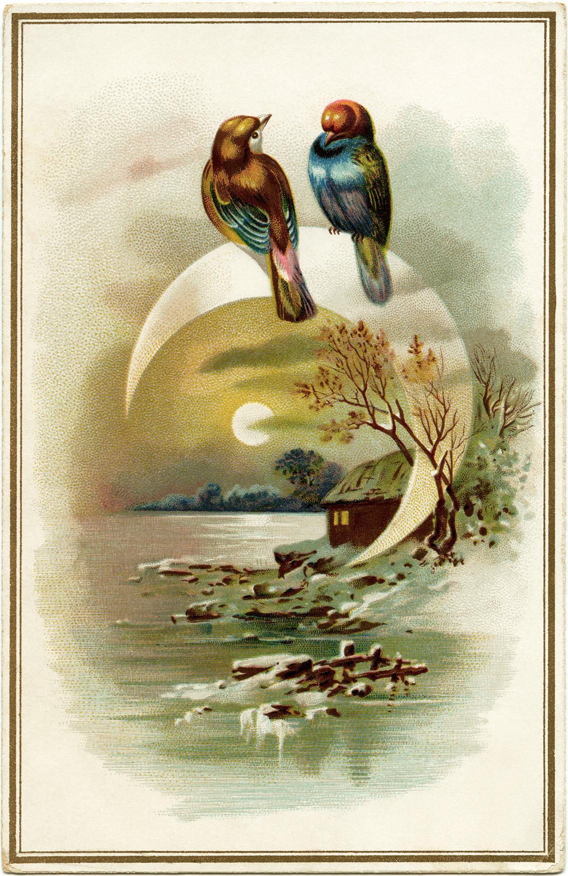 Evening Bird Scene ~ Free Vintage Image