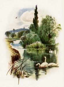 swans swimming illustration, free vintage clip art, swan on pond, nature outdoors scene, vintage swan image