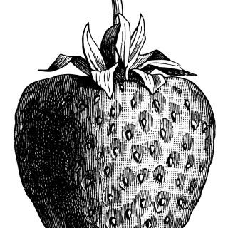 Vintage Strawberry ~ Free Clip Art Illustration