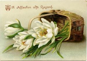 Victorian flower card, vintage flower clip art, white flowers in basket, antique floral illustration, old fashioned card