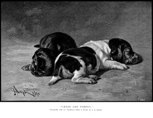 vintage puppy illustration, Tudor Jenks poetry, caesar and pompey poem, black and white graphics, sleeping dogs picture, dog poetry, old book page