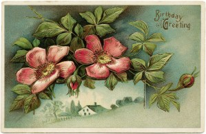 Victorian postcard graphics, vintage birthday postcard, wild rose clip art, old fashioned birthday card, vintage flower illustration