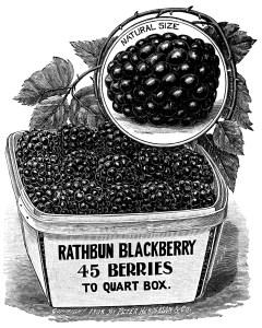 OldDesignShop_Pg173BlackberriesRathbun