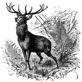 Deer ~ Free Vintage Clip Art