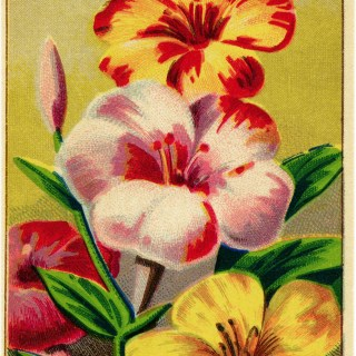 Vintage Floral French Seed Label