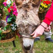 Miniature donkeys at Old Glory Ranch