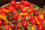 The Mini Bell Peppers have proven to be a great addition to the garden. Beautiful colors and super sweet to eat. The orange peppers in the picture are our Tequila Sunrise - they pack the heat!