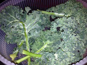 Very important step - make sure your kale is dry before adding the olive oil.
